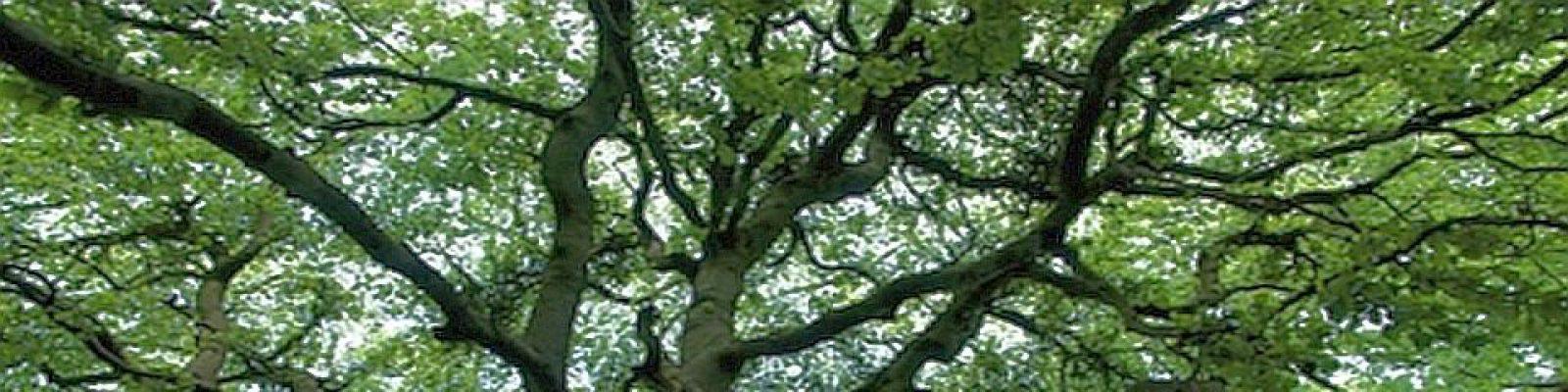 Baum-Welten